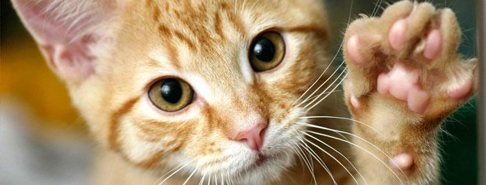¿Cómo se comunican los gatos con los seres humanos?